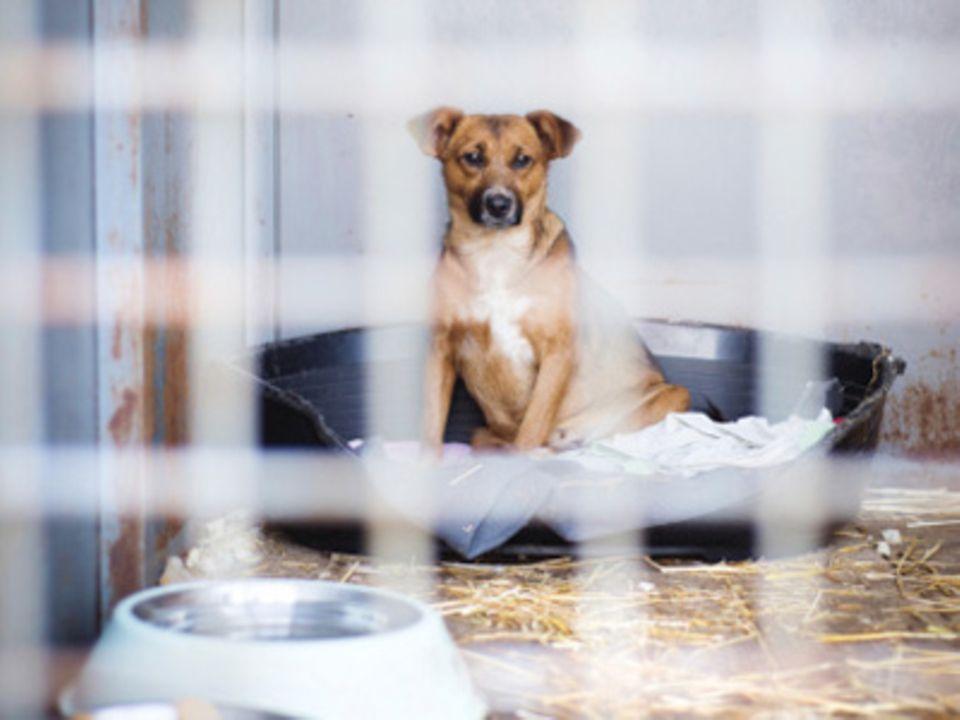 Tiere unterm Tannenbaum: Ein Hund vom Christkind?