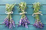 Lavendel gibt es schon fertig in kleinen Duftsäckchen zu kaufen oder Sie nutzen auch hier Ihre eigenen Stoffbeutelchen.