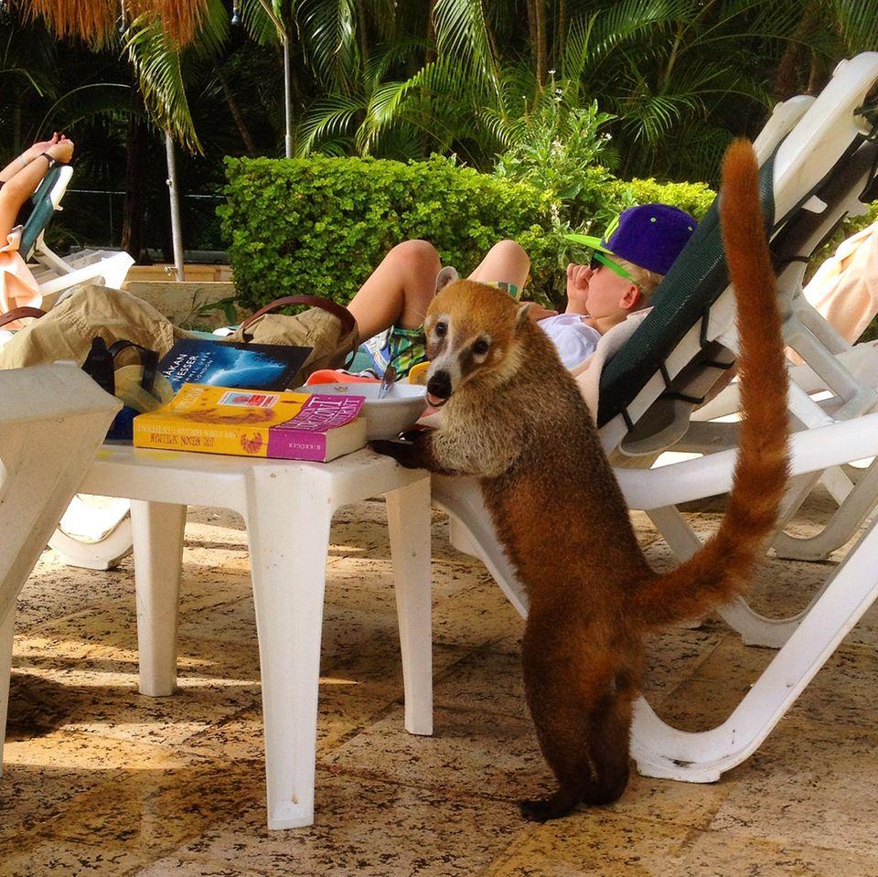 Reise: Fast unbemerkt im Paradies – Familienreise nach Mexiko, Woche 1