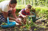 Vater mit Sohn bei der Gartenarbeit, ernten Karotten
