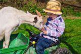 Junge sitz auf fahrbarem Spielzeugtraktor, Ziege zu seiner Rechten