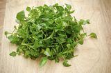 Das gesündeste Gemüse: Brunnenkresse. In ihr ist mehr Eisen als in Spinat enthalten, mehr Kalzium als in Milch, und mehr Vitamin C als in Orangen. Außerdem liefert sie Kalium, Eisen, Phosphor, Jod und die Vitamine A, B, D und E. Brunnenkresse schmeckt leicht kressig scharf (okay, das ist mehr was für die Eltern), ist lecker einfach so aus der Hand in den Mund. Oder statt Salatblatt auf dem Sandwich.