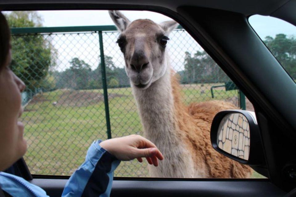 Blog Sandkuchen-Geschichten Tierpark