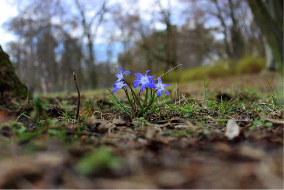 Blog Rubbelbatz Natur erleben