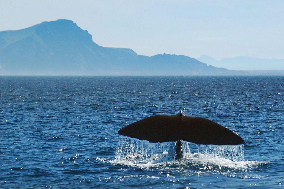 Blog Küstenkidsunterwegs Bücherboot Wal