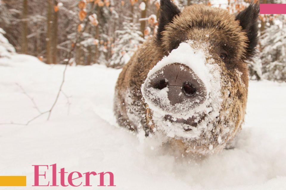 Blog Wellness Mama Wildschweine