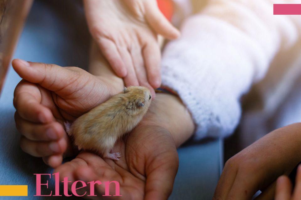 Blog Mama steht Kopf, Haustier Hamster