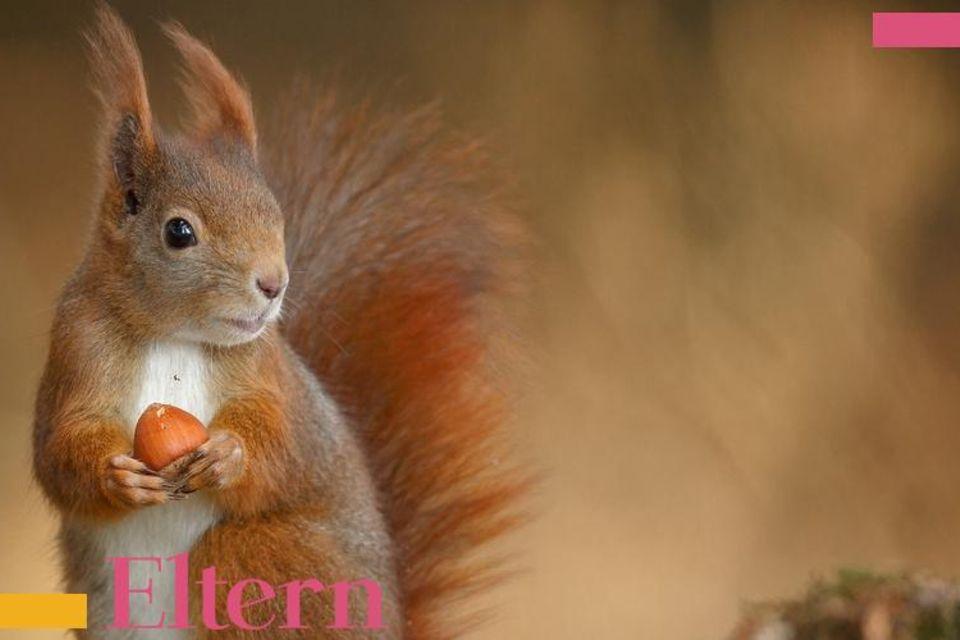 Wellness Alarm: Eichhörnchen, seid auf der Hut!