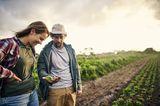Zwei Personen auf dem Feld gucken sich Salat an
