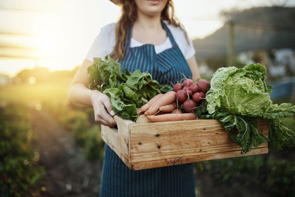 Frau trägt frisch geenrtetes Gemüse in einer Kiste