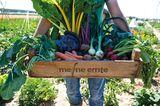 Person hält eine große Kiste Gemüse auf dem Acker