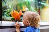 Kind schaut in ein Aquarium