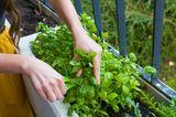 Gemüse vom Balkon