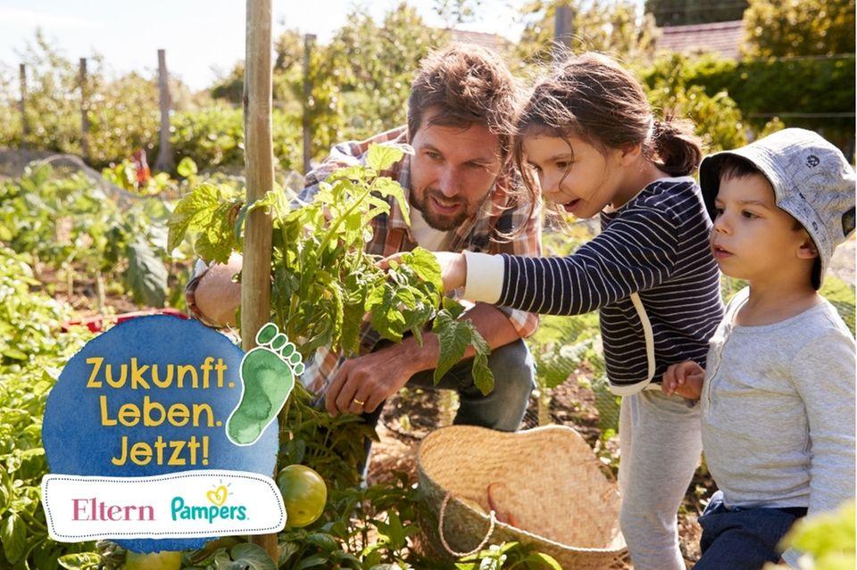 Papa pflanzt mit seinen Kindern Tomaten an