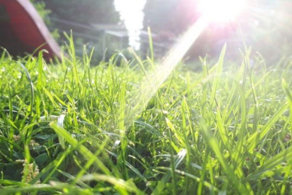 Wiese mit Sonnenschein