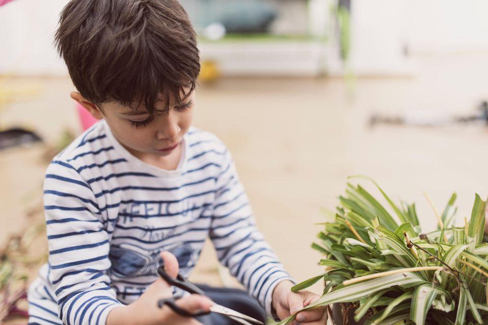 Kleiner Junge beschneidet eine Pflanze mit einer Schere