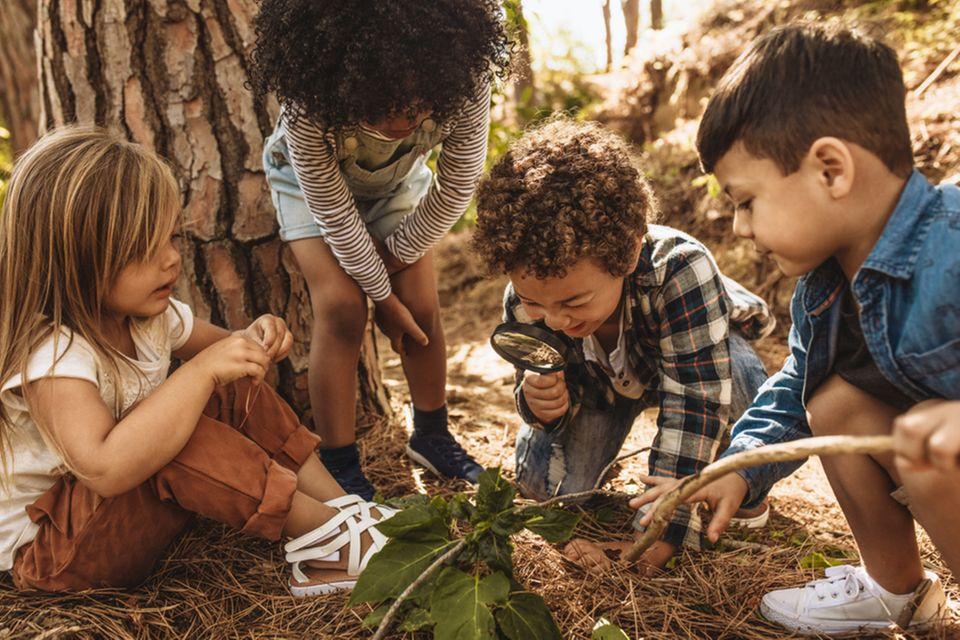 Kinder erforschen die Natur