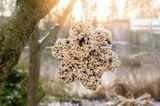 Vogelfutteranhänger am Baum